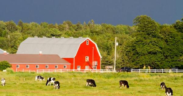 【解读】联邦试点农业食品加工雇主移民项目更新