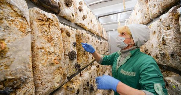 联邦农业食品加工雇主移民项目正式启航